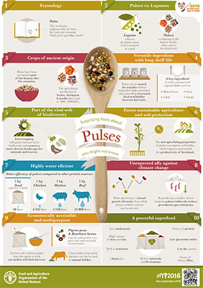 Infographic: Surprising facts about pulses you might not know