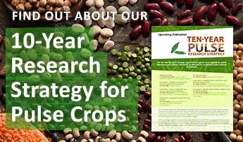 Find Out About Our 10-Year Research Strategy for Pulse Crops