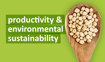 Productivity & Environmental Sustainability